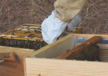 Colmeias inteligentes ajudam a frear o desaparecimento de abelhas